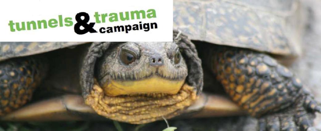 Turtle Crisis – Tunnels and Trauma Campaign