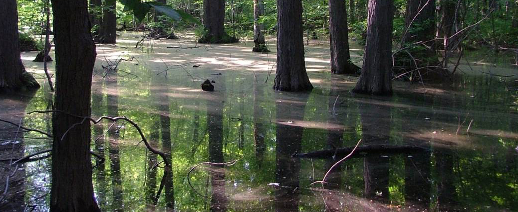 Sacred Swamp
