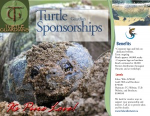 turtle sponsorships