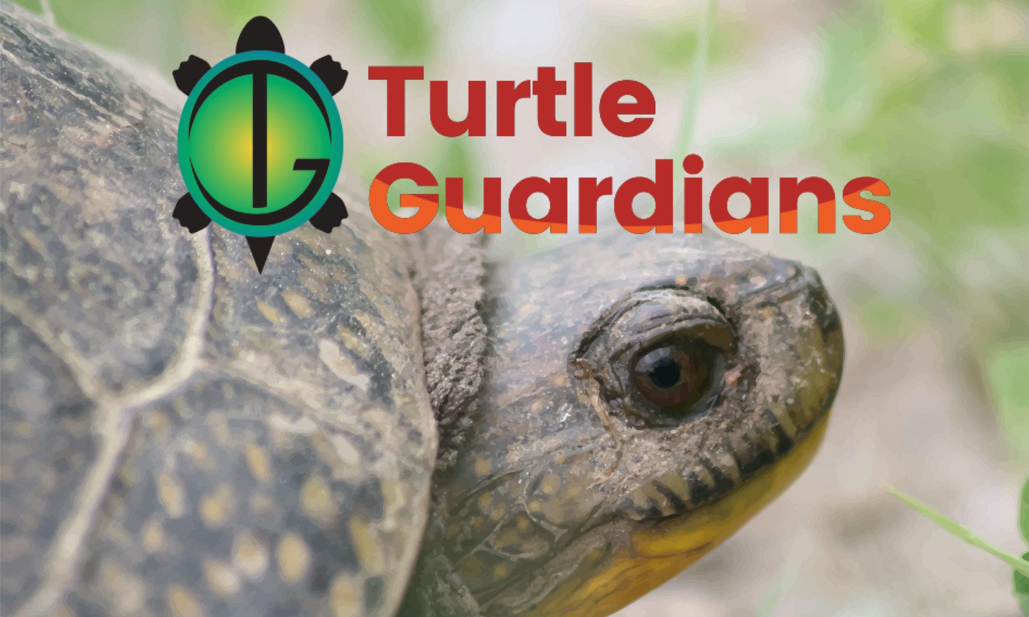 Turtle Guardians