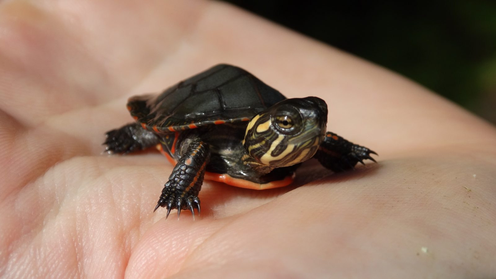 So you found a turtle…